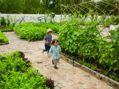 SPIER Werf - Easter vegetable garden (HR)