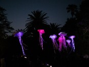 Spier Festival of Light Art (HR)
