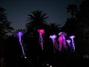Spier Festival of Light Art (HR)