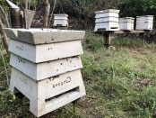 Beegin concrete hives