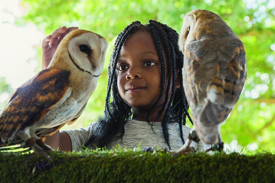 Eagle encounters - girl 2