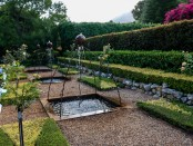 TCH-Gardens-Fauna-248 (award-winning scructured garden & water feature)
