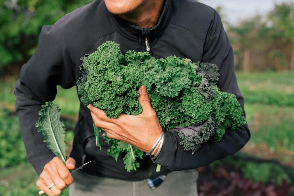 Spier Food Garden Workshops 1 (HR)
