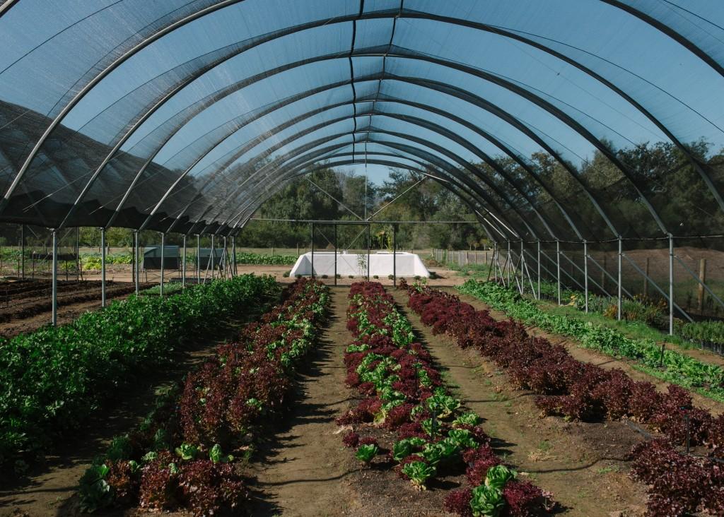 Spier Food Garden Workshops 2 (HR)